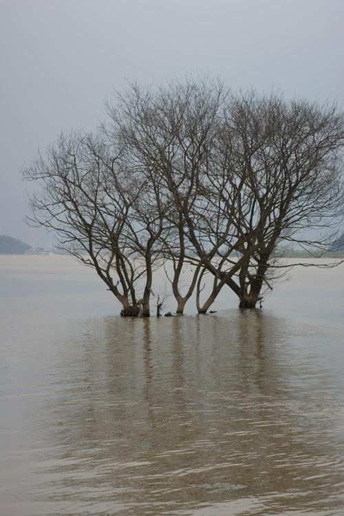 2나무 - 표지사진.JPG